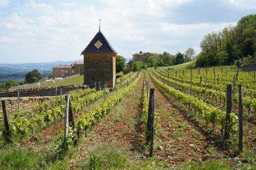 """Clos de Rochebonne"" Burgundy Report by Bill Nanson - 2019/07"
